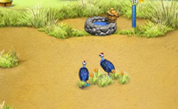 Play Animal Care 5 game on Perro-Electric.Com